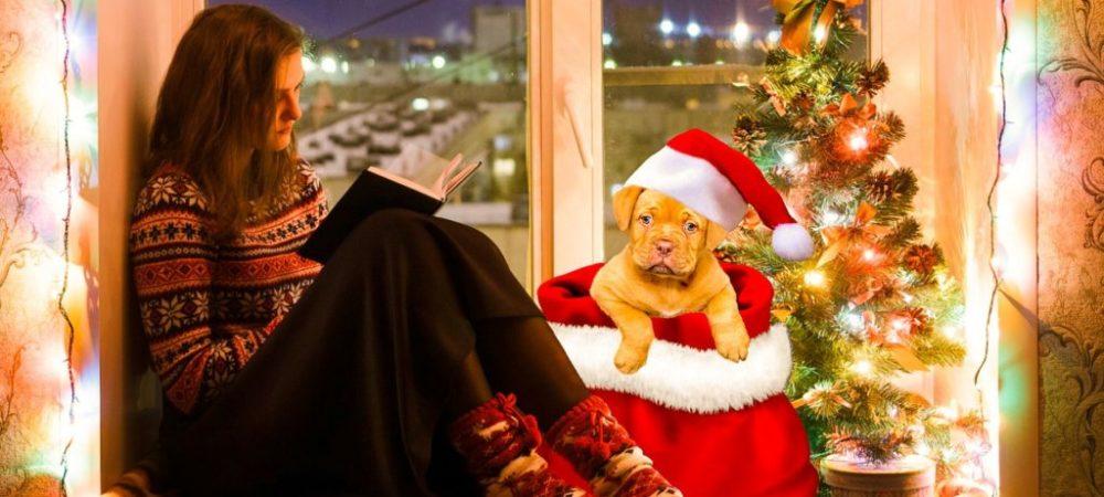 Hunde-Adventskalender-gute-Weihnachten
