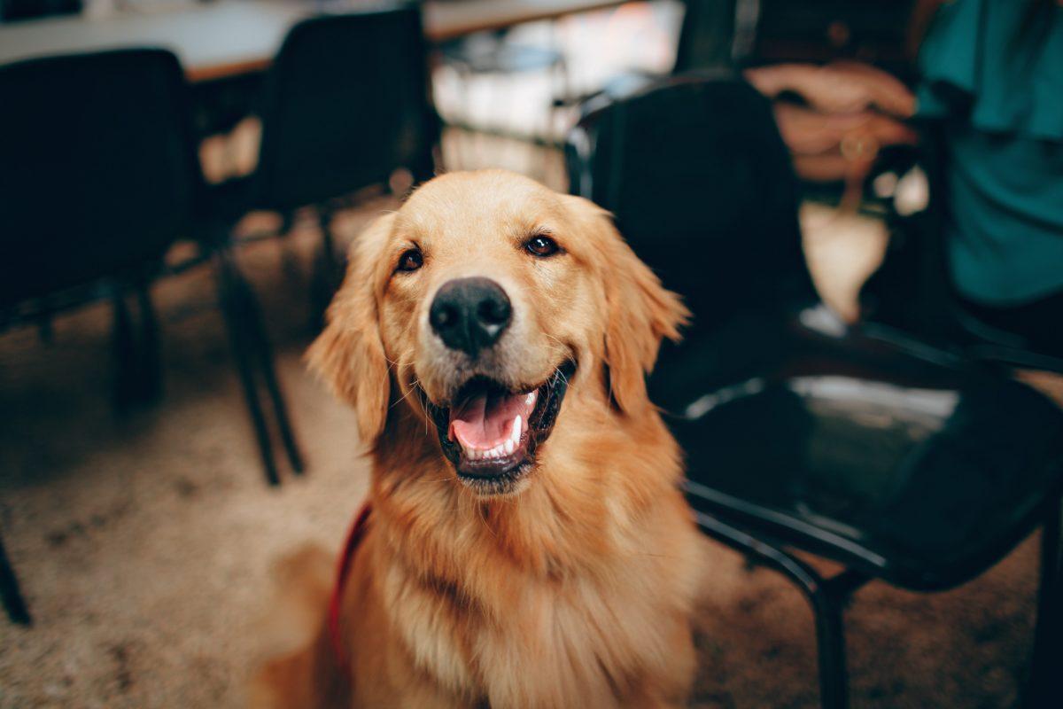 Weihnachtsgrüße für Hund und Haustiere