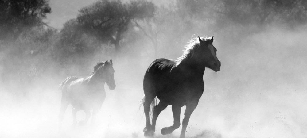 pferde-advents-kalender-schleich