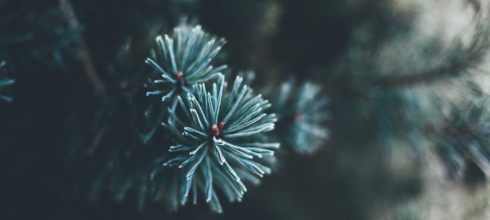 liebesgedichte-fuer-den-partner-an-weihnachten